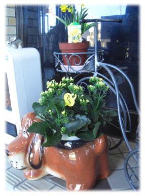玄関でお花のお出迎えです♪